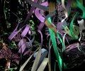 Arek Rafflewski_virtual-forest-1_0-maly